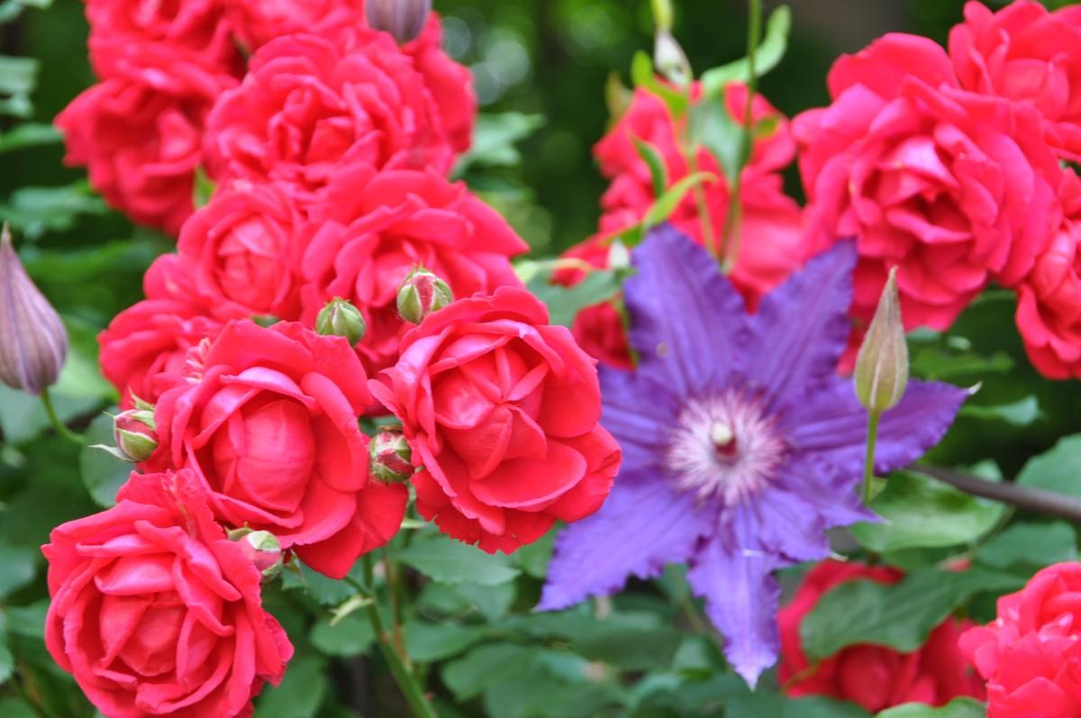 Color in Daniela\'s garden in Ohio - FineGardening