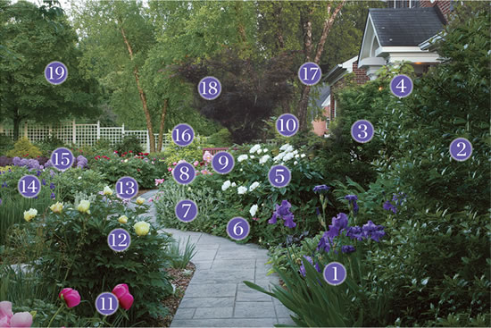 Plants For An Inviting Front Yard Pathway Plant