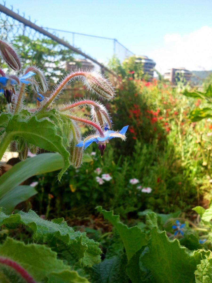 Etonnant Davidu0027s Veggie, Fruit, And Herb Garden In Hawaii
