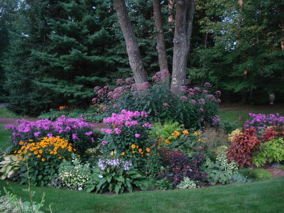 More From Lynnu0027s Garden In Wisconsin!