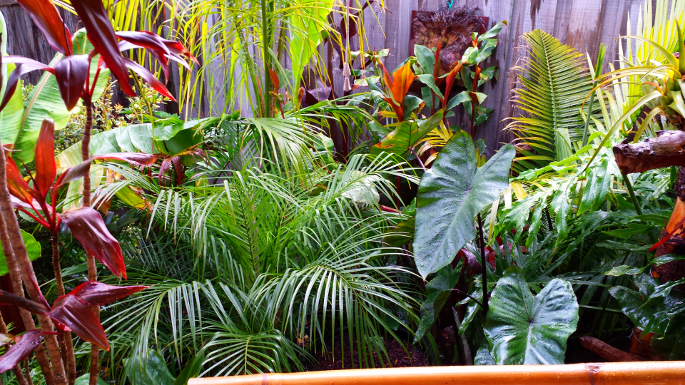 Daniel\'s tropical garden in AUSTRALIA - FineGardening