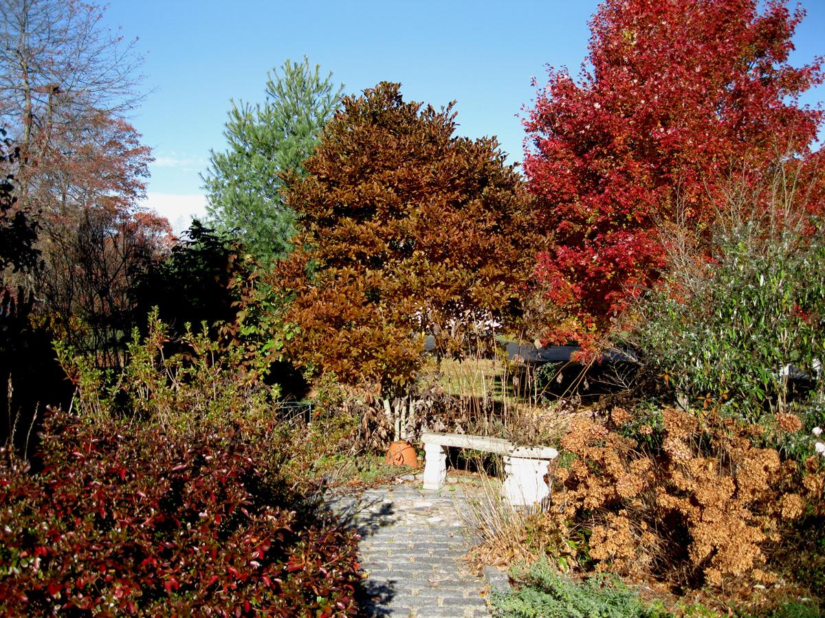 Fall in Gail\'s Rhode Island garden (5 photos) - FineGardening