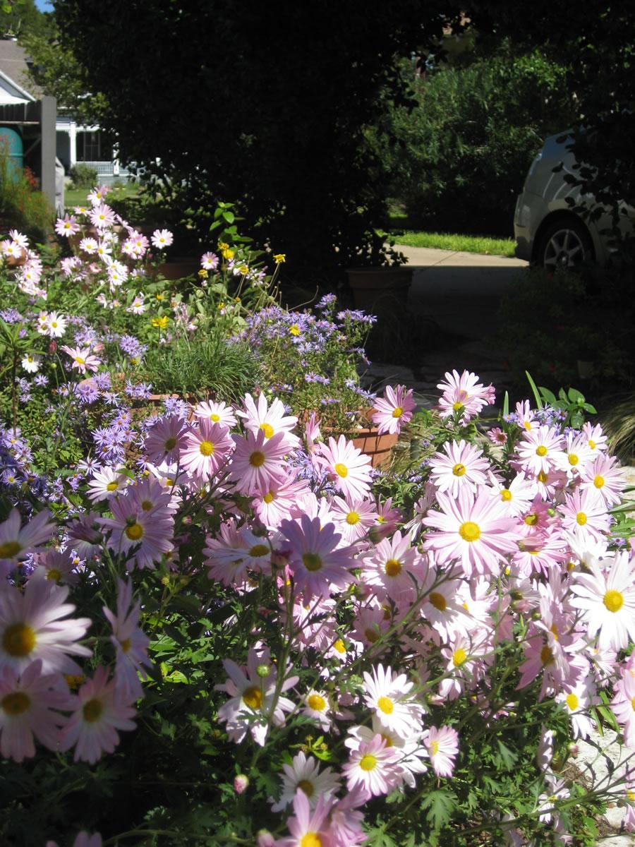 Carol S Garden: Carol's Lawn-turned-garden In Texas (12 Photos