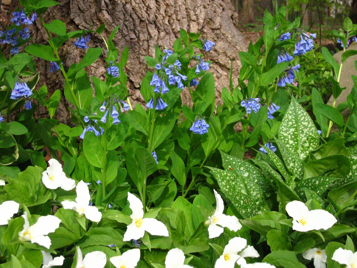 Danielas garden in spring 12 photos finegardening danielas garden in spring 12 photos mightylinksfo Gallery