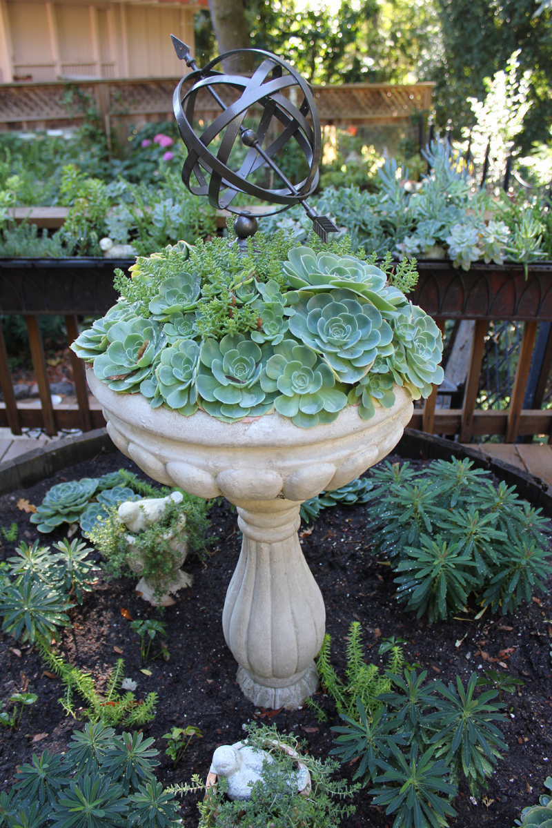 Zone Garden Design Succulents Html on