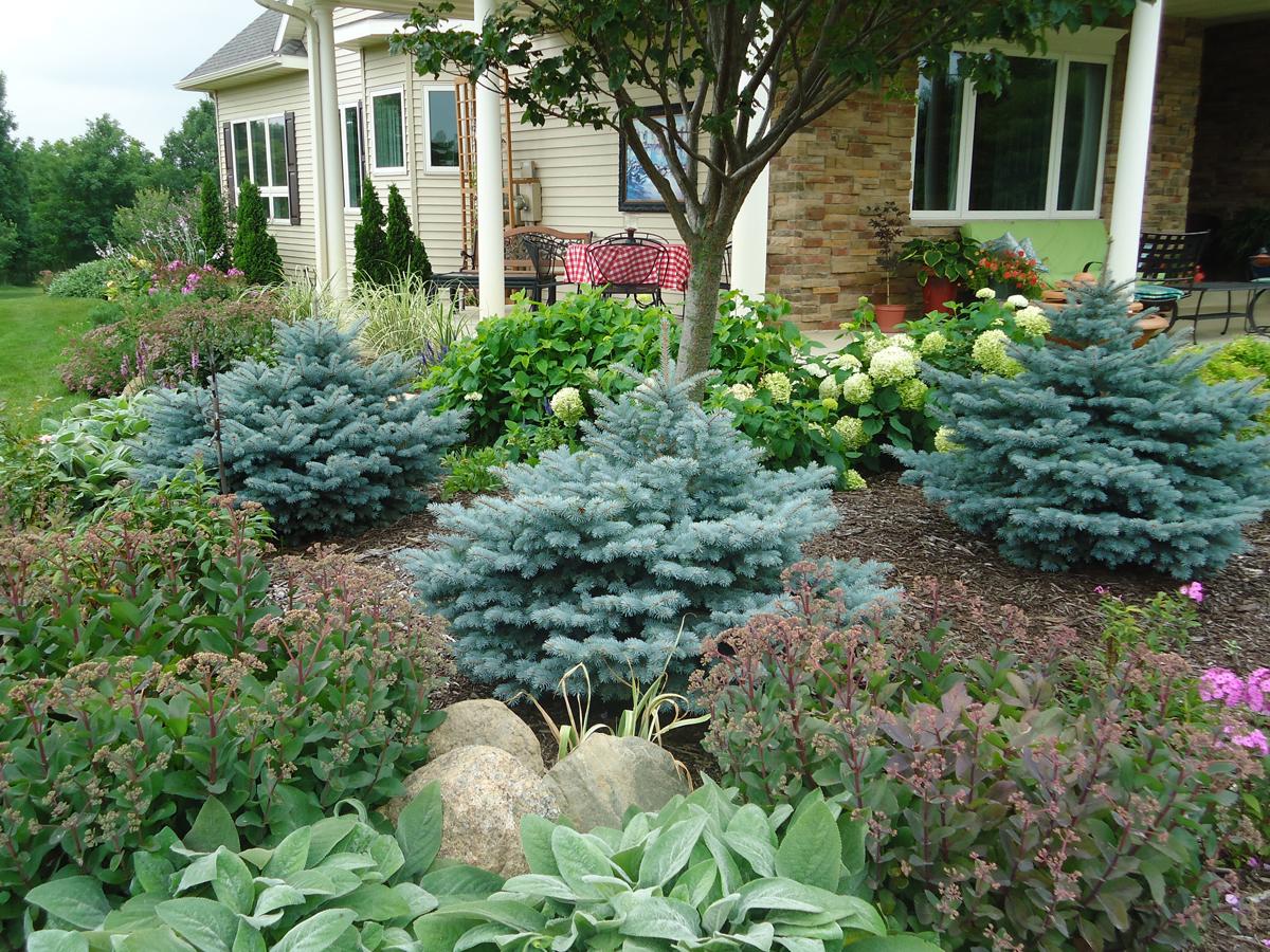 Bonnie's Zone 4 garden in Minnesota (12 photos ...