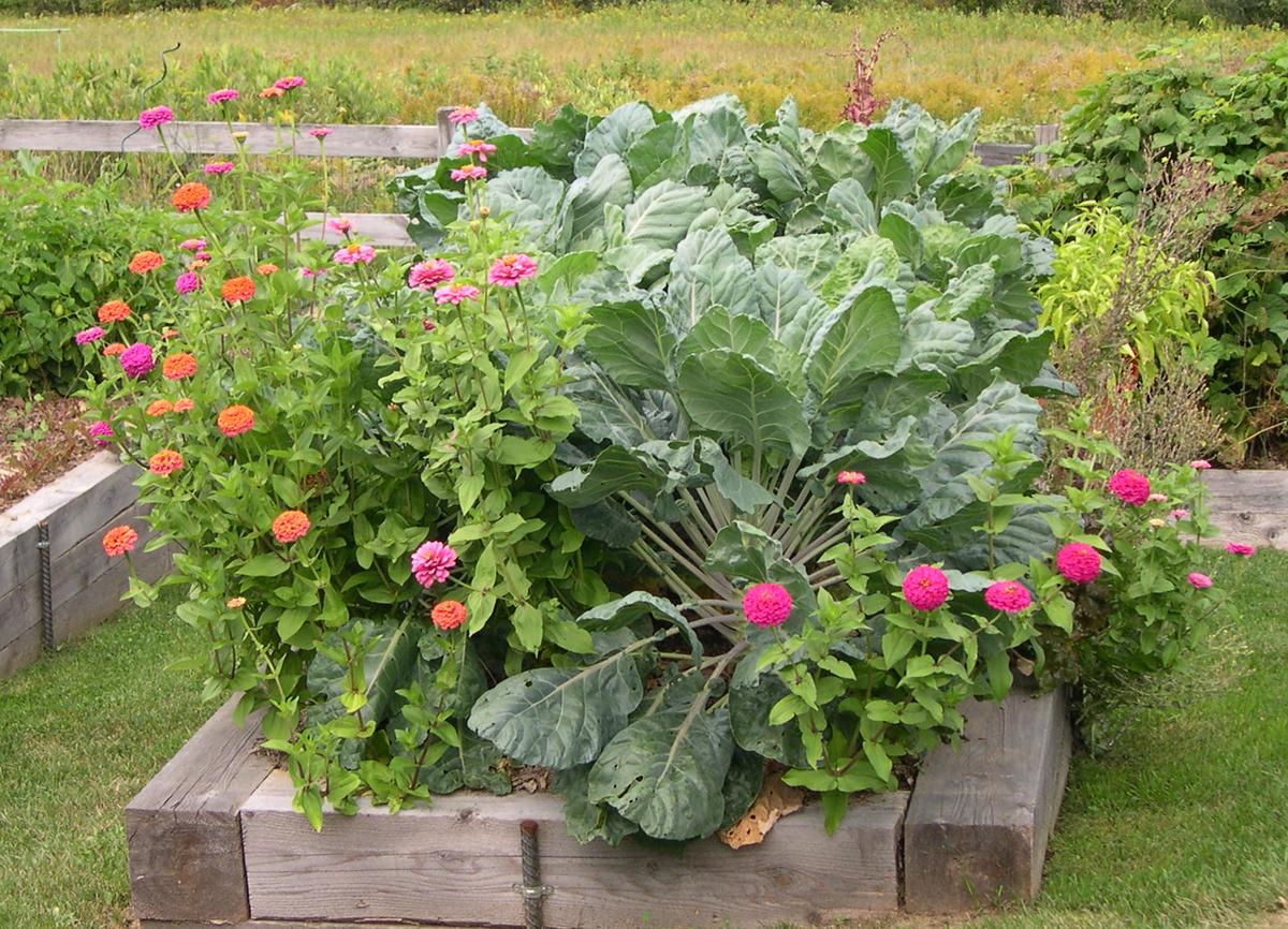 Harriet\'s vegetable garden in Maine - FineGardening