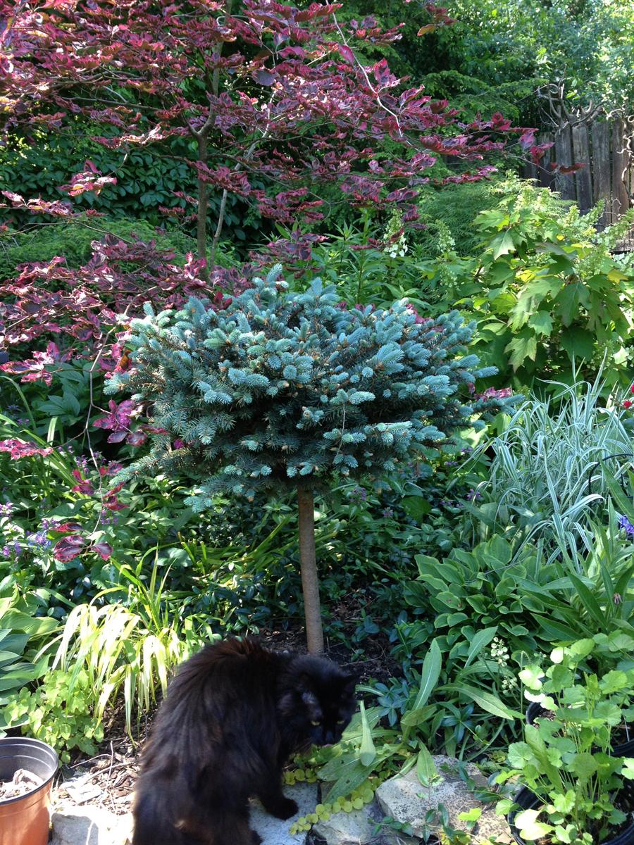 Diane\'s garden in Illinois, revisited - FineGardening