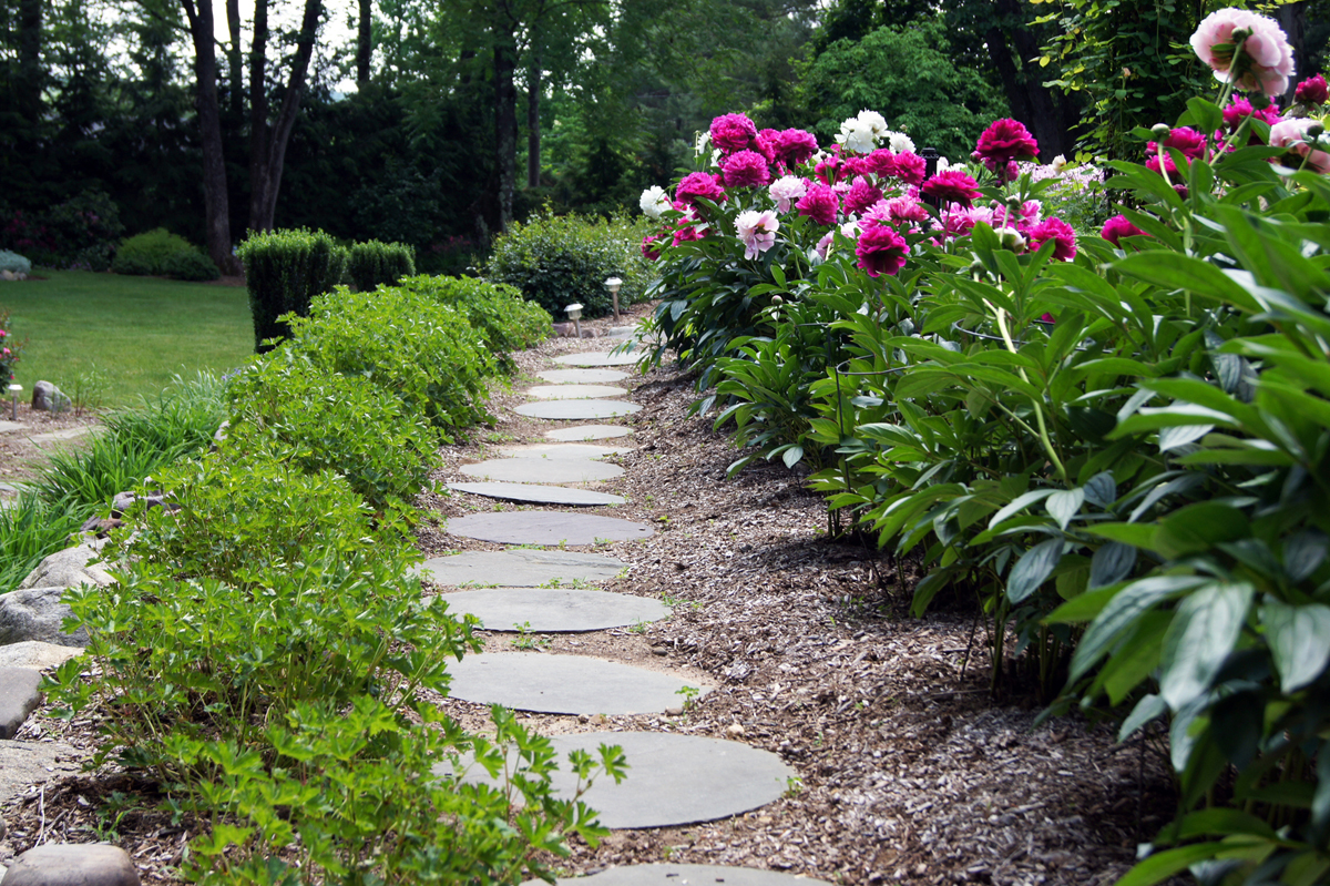 Peonies in clare 39 s garden in new jersey finegardening for Garden design podcast