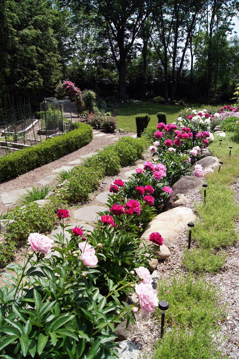 Peonies In Clare S Garden In New Jersey Finegardening