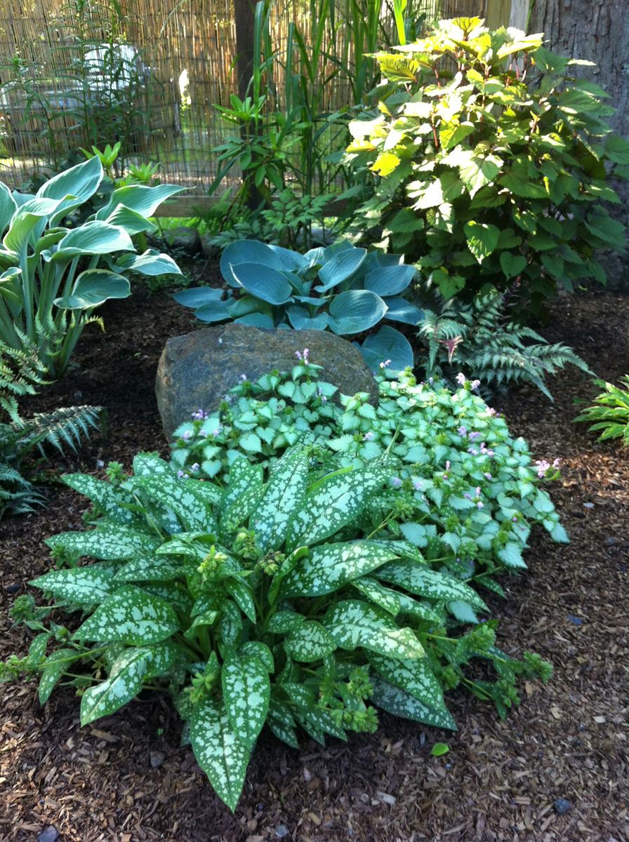 Laura\'s garden in Connecticut - FineGardening