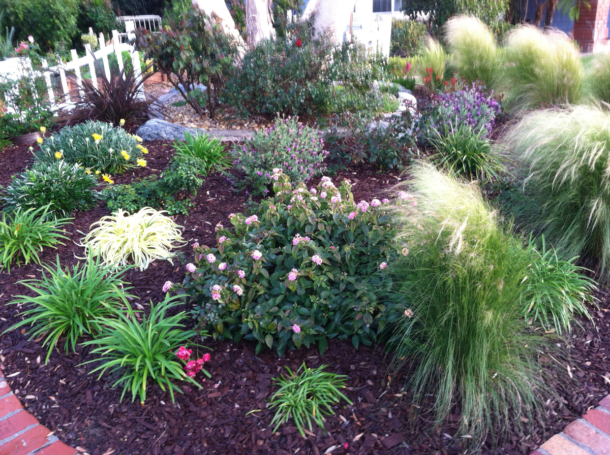 karen's no-lawn front yard in california - finegardening