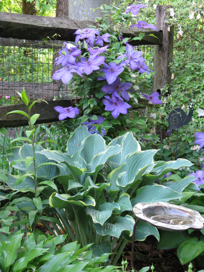 Dorothys Garden In Maryland Finegardening