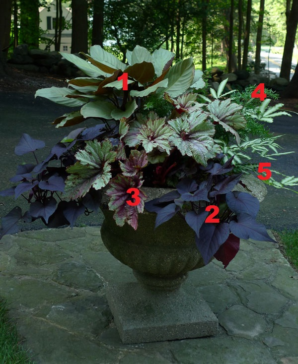 2012 Container Design Challenge Results: Fantastic Foliage