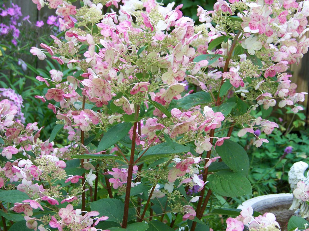 Carol Jeanu0027s Garden In Wisconsin