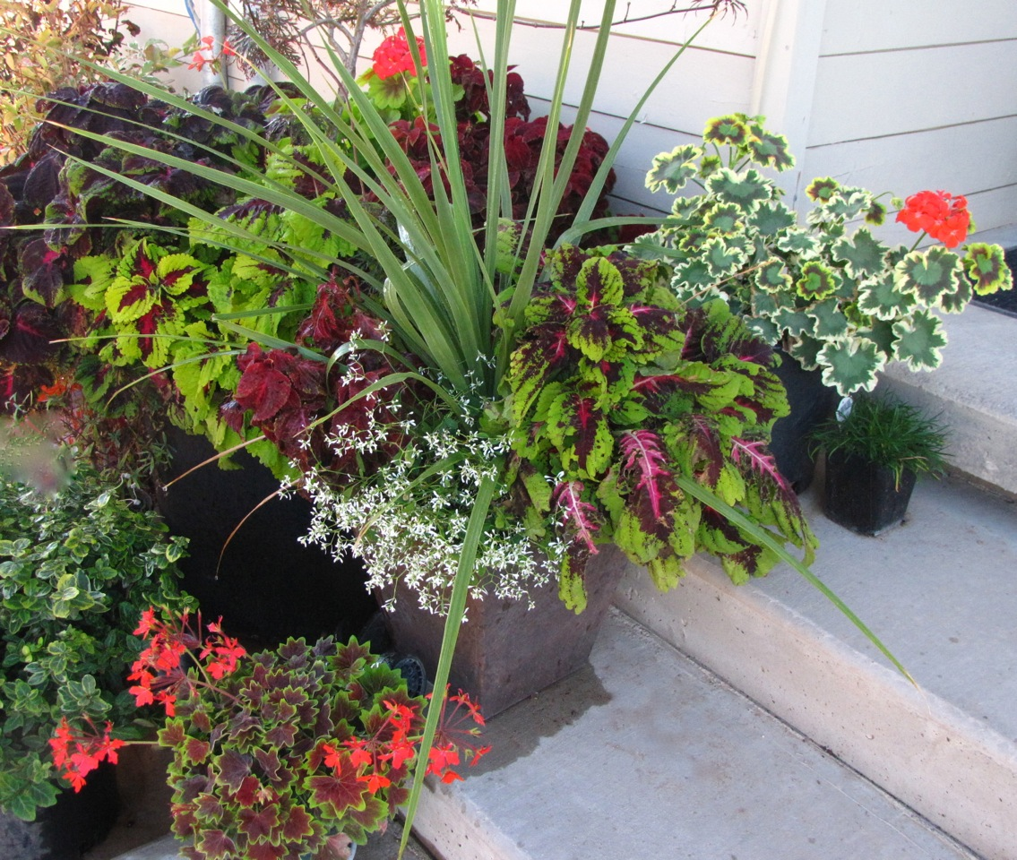 Sue\'s container gardens in Nevada - FineGardening