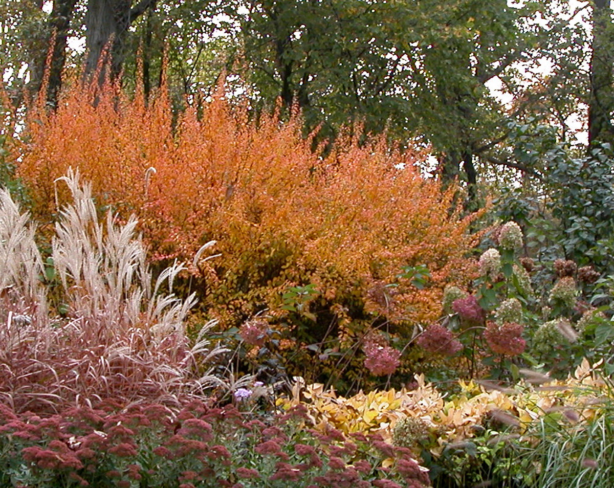 3 more of Karen\'s favorite plants (Day 2 of 2 in Karen\'s garden ...