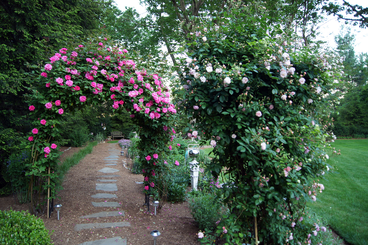Love Garden Roses: Clare's Garden In New Jersey, Day 1 Of 2
