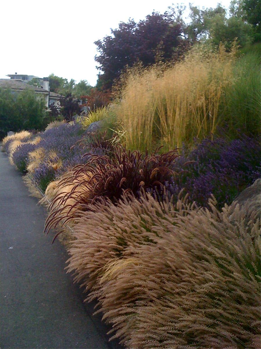 READER PHOTOS! Roger & Mary\'s garden in California - FineGardening
