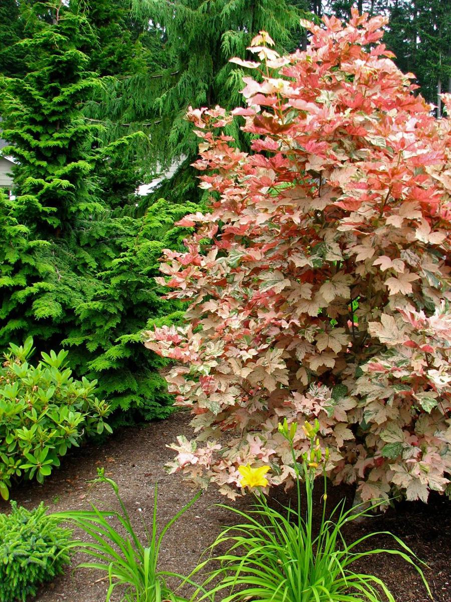 READER PHOTOS! Laura\'s garden in Washington state - FineGardening