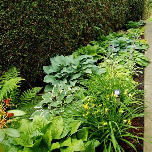 READER PHOTOS! Rebecca\'s garden in British Columbia - FineGardening