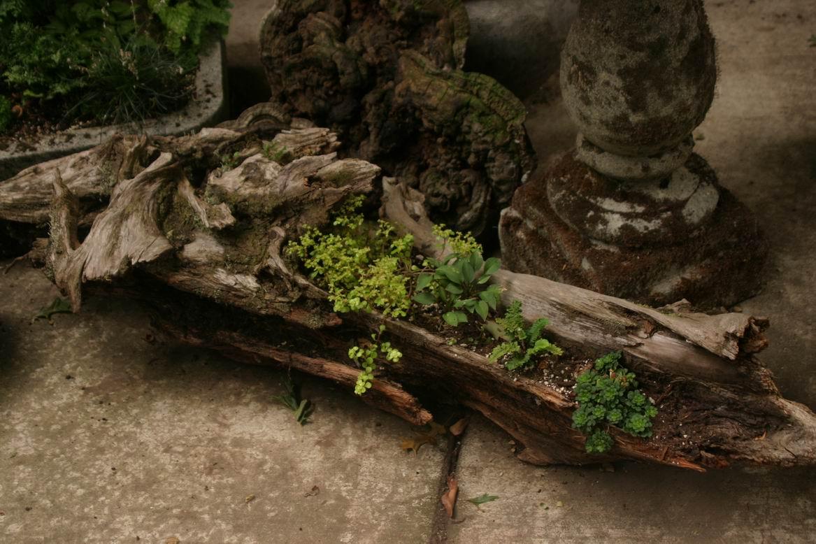 Driftwood garden - FineGardening