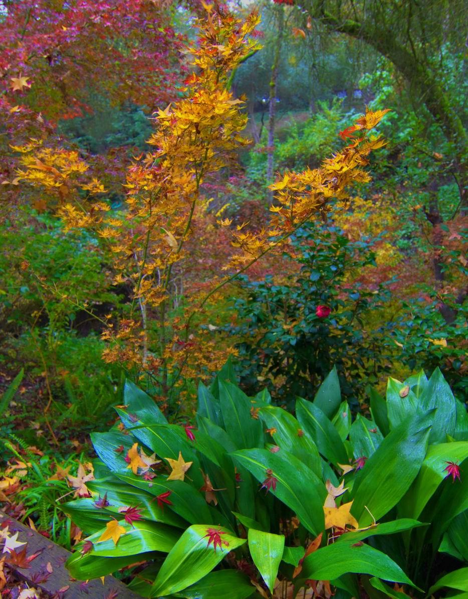 READER PHOTOS! Pauline\'s garden in California, in full fall color ...