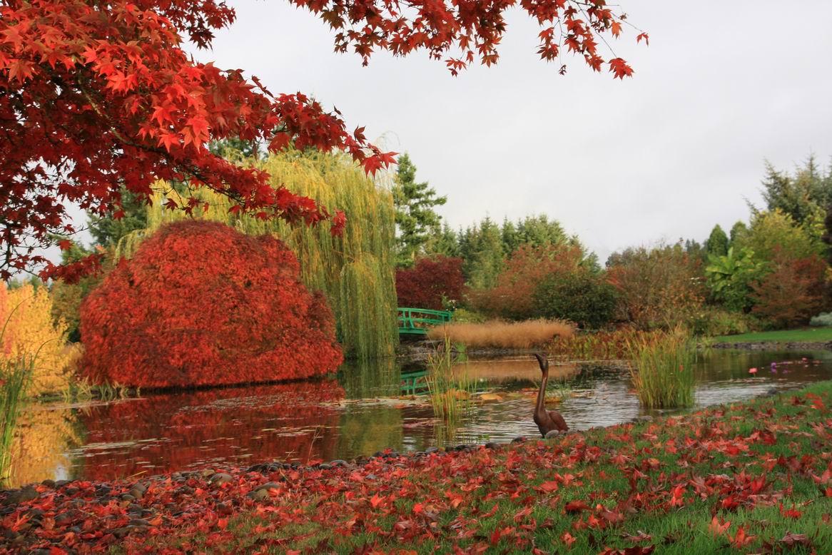 READER PHOTOS! Eamonn\'s garden in Oregon - FineGardening