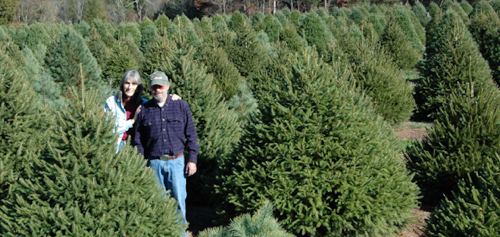photoillustration wolgast christmas tree farm - What Christmas Tree Smells The Best