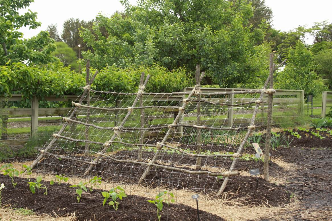 Veggie trellising ideas from Longwood Gardens - FineGardening
