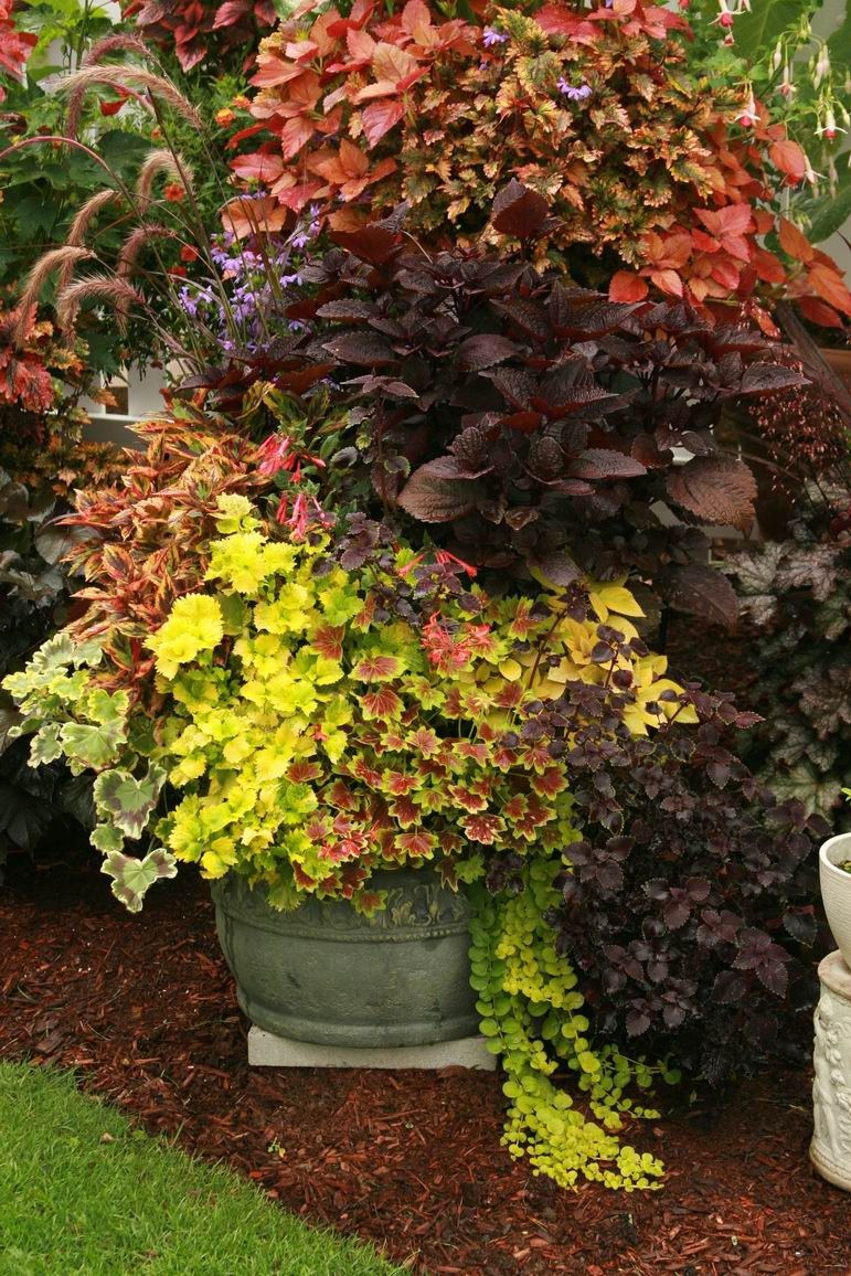 Containers by Deanne Fortnam, Part 4 - FineGardening