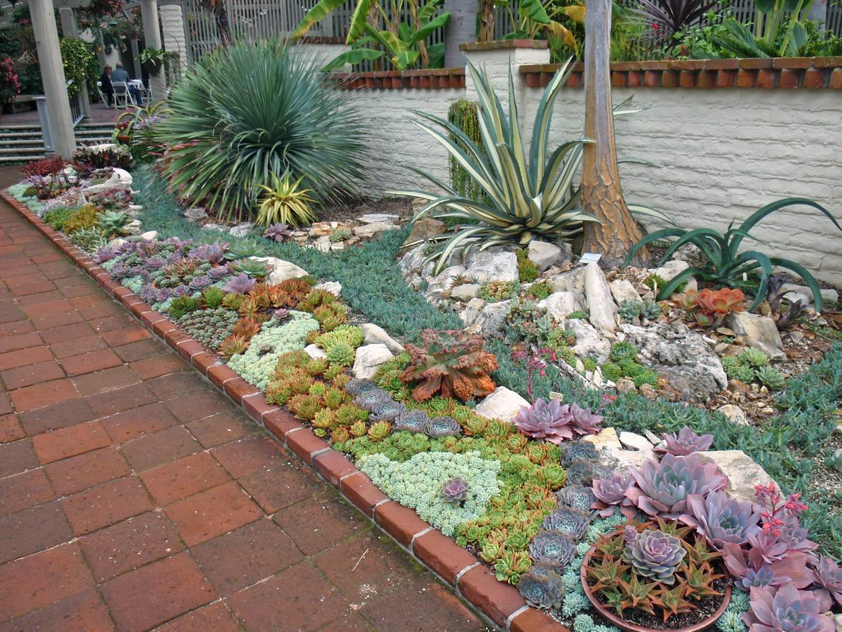 A Gem Of Succulent Garden