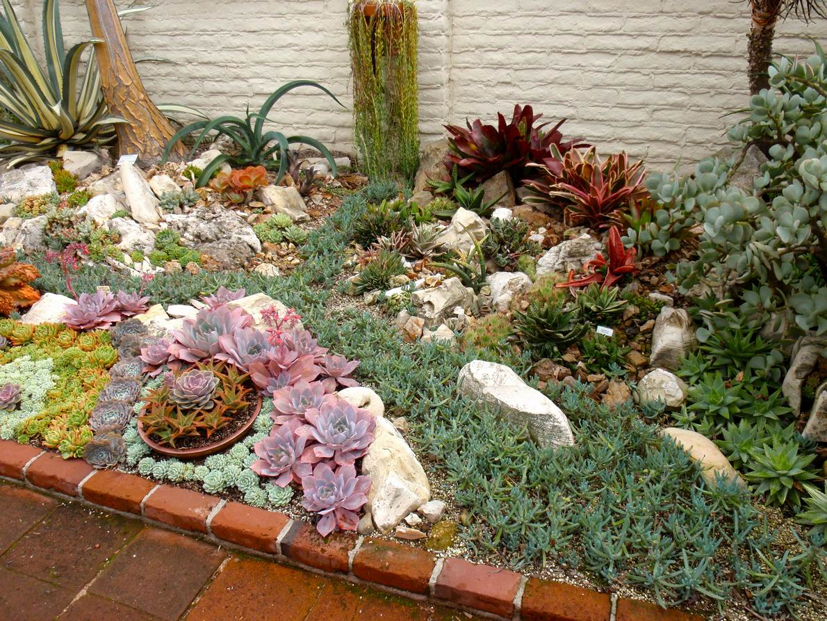 Perfect A Gem Of A Succulent Garden