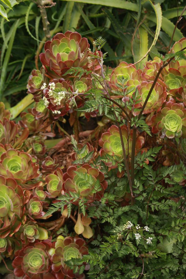 Mixing Succulents and Herbaceous Perennials - FineGardening