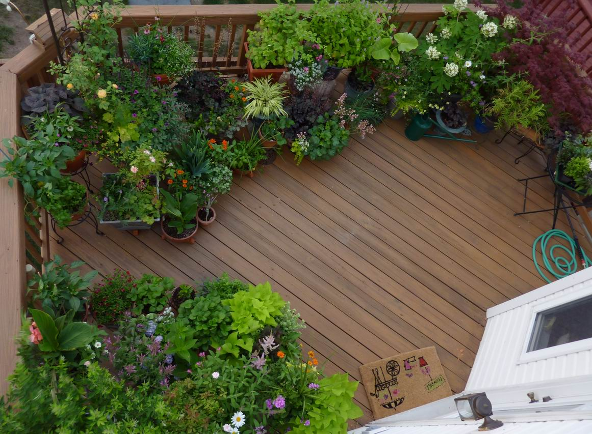 Reader photo all the joys of a garden on a deck for Garden design podcast