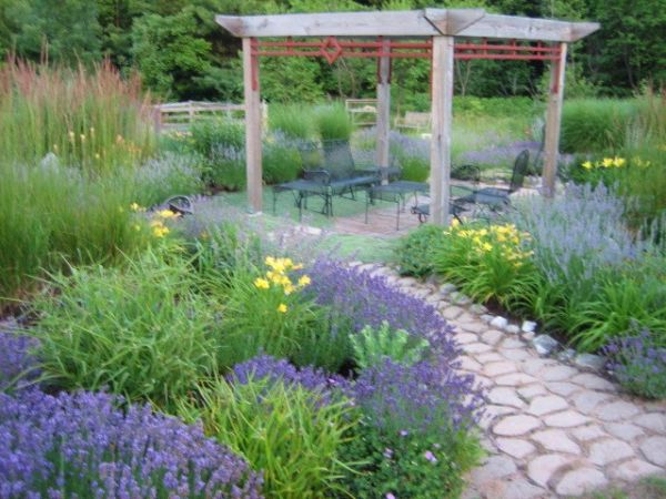 How To Plant A Backyard Garden lavender garden wins backyard garden spaces contest - finegardening