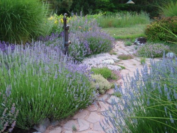 Beau Out Of More Than 140 Entries, We Have Selected Our Winner: Northern  Michigan Lavender Garden. Sandy Waldrop And Her Husband, John, Have  Transformed An Open ...