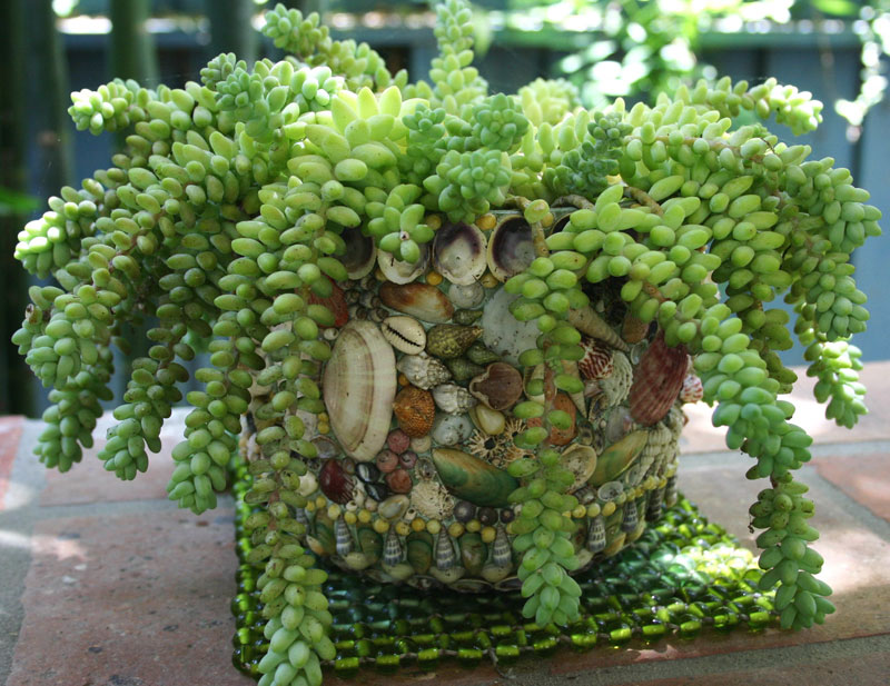 Book review and giveaway succulent container gardens finegardening workwithnaturefo