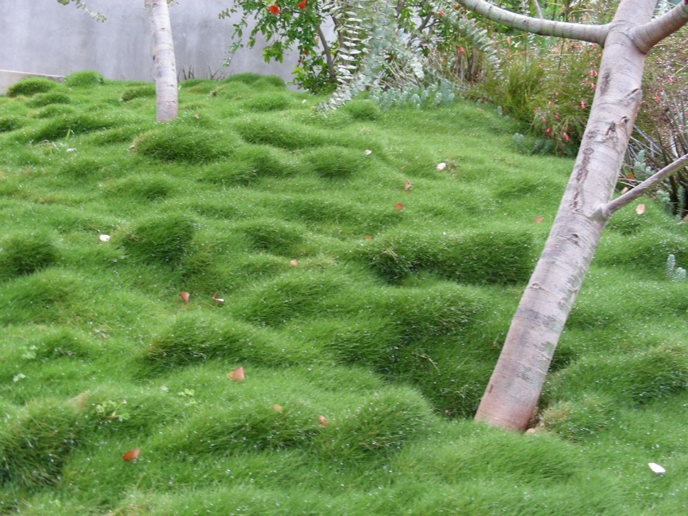 Rethinking The Suburban Lawn: National Coalition Launches New Website