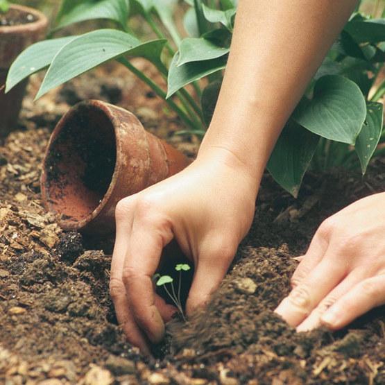Jump-Start Your Seeds - FineGardening