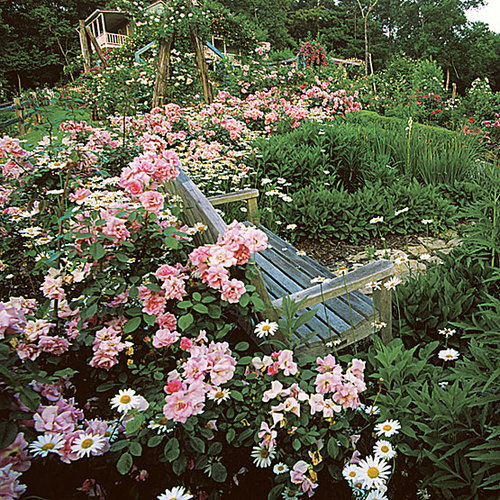 Timeless Cottage Garden Roses Finegardening