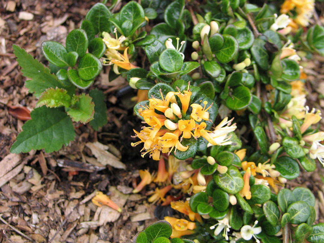 Episode 19 Underused Shade Plants Finegardening