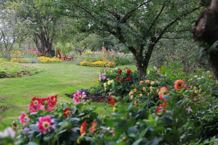 How to Create A Dream Garden