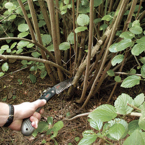 Using a pruning saw on green wood.