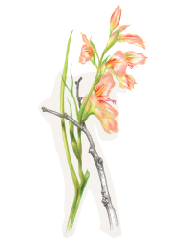 A Y-shaped stick is used to prop up a drooping flowerhead.