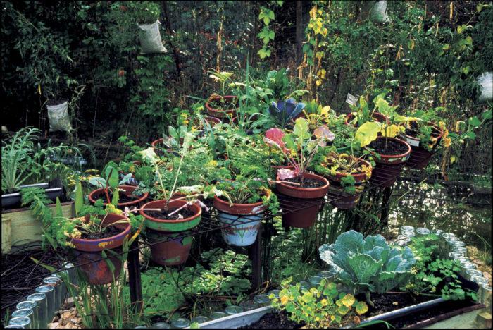 DIY Kitchen Garden Containers - FineGardening