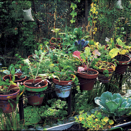 DIY Kitchen Garden Containers