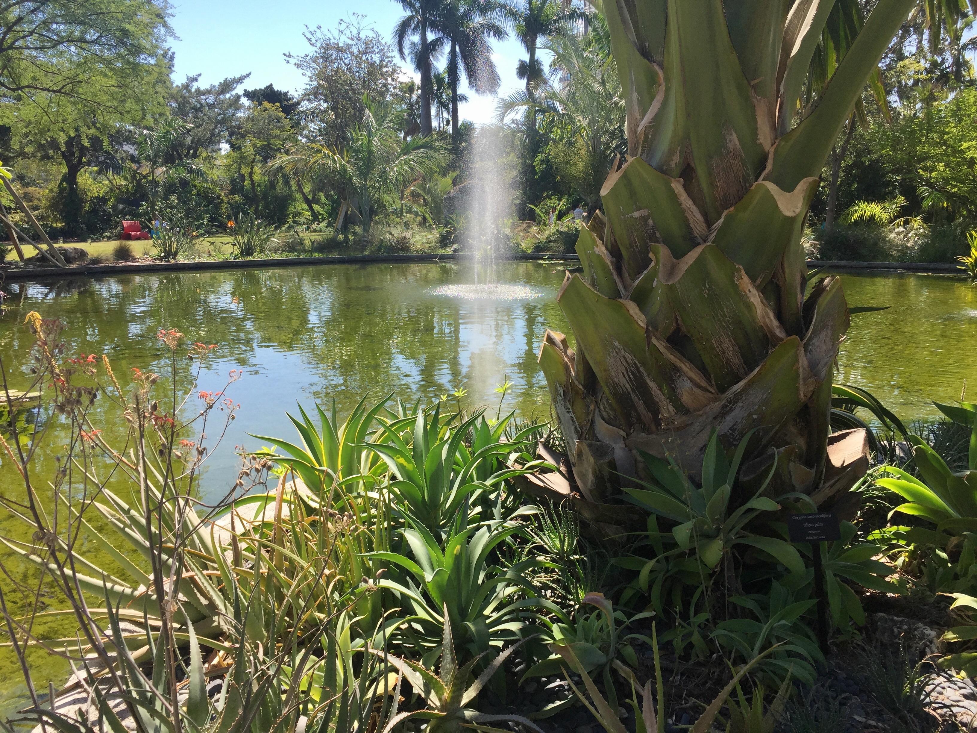 Miami Beach Botanical Garden - FineGardening