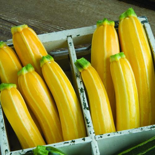 Best Vegetables to Grow in California - FineGardening