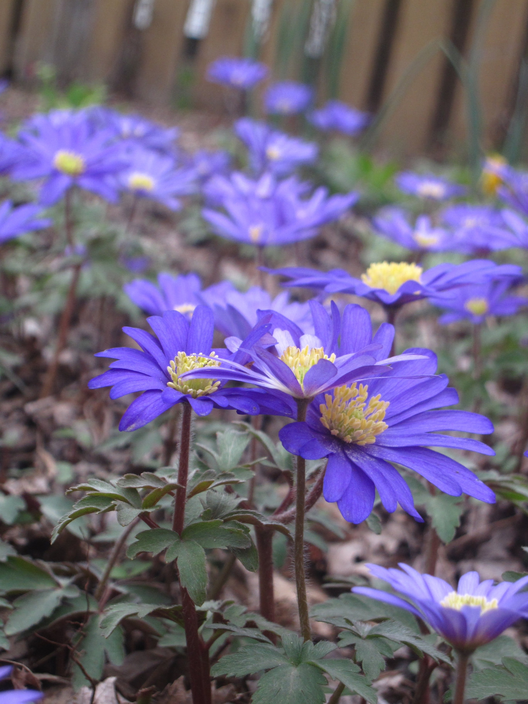 Plants With Lovely Blue Flowers